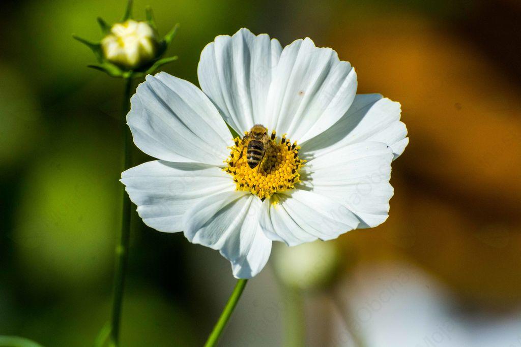 Svetovnega dne čebel bomo deležni tudi v Občini Ivančna Gorica