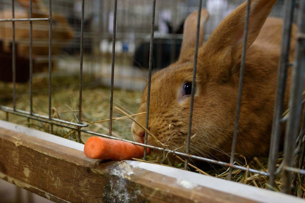 Izjemno uspešna razstava malih pasemskih živali v Ivančni Gorici