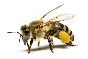 Vabljeni na predavanje o čebelarstvu dr. Petra Kozmusa