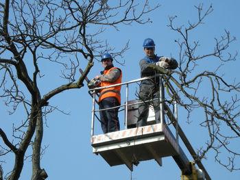 OBVESTILO – obrezovanje drevja po Ivančni Gorici