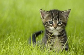 Javni poziv občanom za sterilizacijo lastniških mačk in kastracijo lastniških mačkov v letu 2020