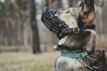 Poziv lastnikom psov