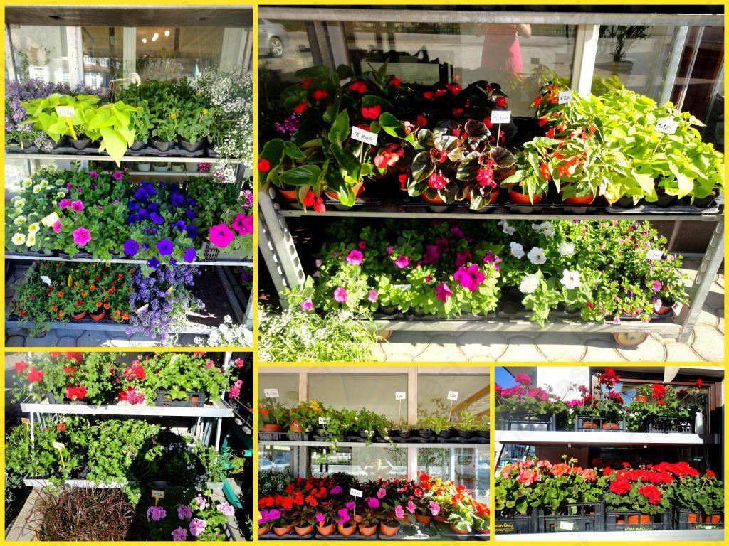 Zunanje balkonske rastline