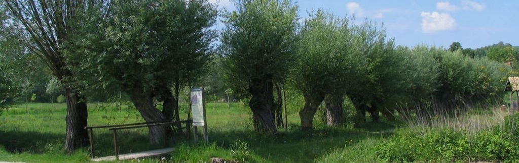 Občina Rogašovci