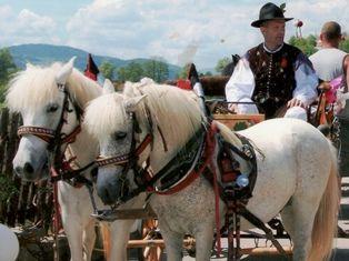 Vožnja s poni kočijo