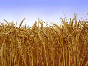 Javni razpis za dodelitev finančnih sredstev za ohranjanje in razvoj kmetijstva in podeželja v občini Medvode v letu 2020
