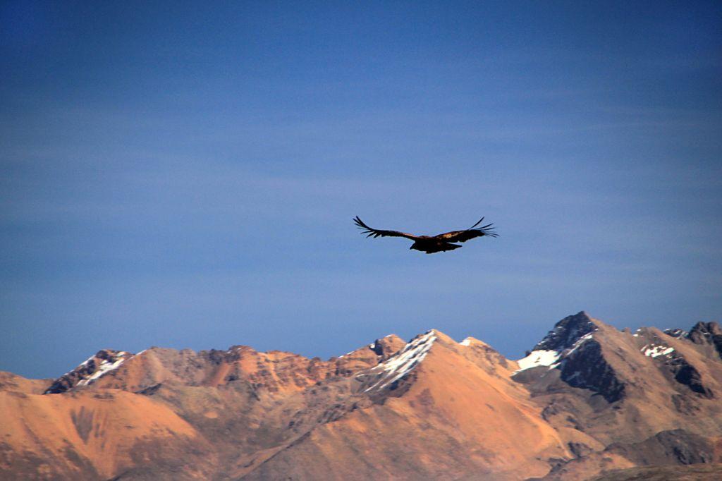 Svobodni kot ptica nad gorami