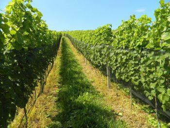 Občina Brežice bo s sofinanciranjem omogočila za pol milijona evrov investicij na področju kmetijstva