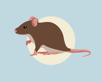 Porast primerov mišje mrzlice v Sloveniji